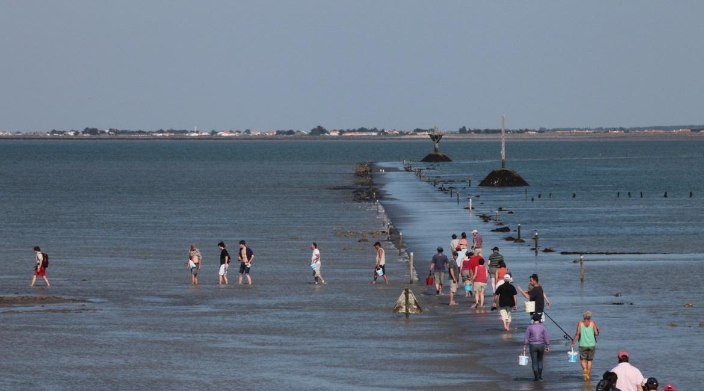 pêche palourde au gois lors du retrait de la mer