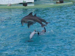 planète sauvage :spectacle des dauphins