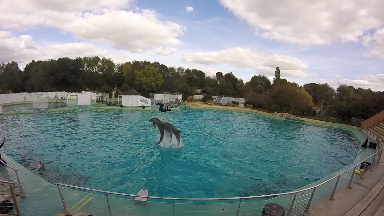 planète sauvage :les dauphins avec les dresseurs