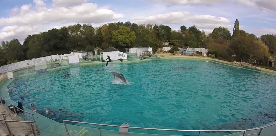 planète sauvage:les dauphins dans le grand bain
